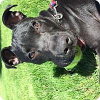 Adopt A Pet :: BRUCE - Quincy, MA