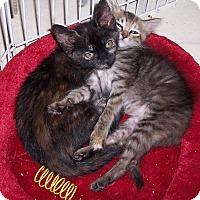 Adopt A Pet :: Suki - Richmond, VA