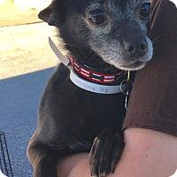 Adopt A Pet :: Taco f/k/a Coco - Houston, TX
