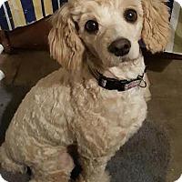 Adopt A Pet :: Christa - Alpharetta, GA