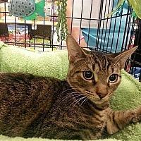 Adopt A Pet :: Jase - Tampa, FL