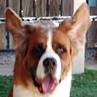 Adopt A Pet :: Alaska - Glendale, AZ