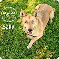 Adopt A Pet :: Sally - Pearland, TX