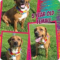 Adopt A Pet :: HONEYSUCKLE - Lexington, NC