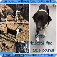 Adopt A Pet :: Bosco - Hearne, TX
