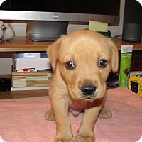 Adopt A Pet :: Rocky - Bowie, MD