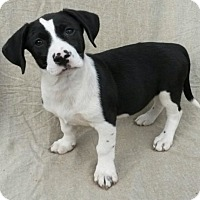 Adopt A Pet :: Perry - East Hartford, CT