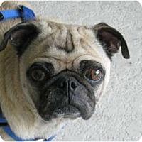 Adopt A Pet :: Dino - Windermere, FL