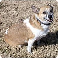 Adopt A Pet :: Ginger - Windham, NH