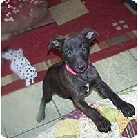 Adopt A Pet :: Girl 1 - Antioch, IL