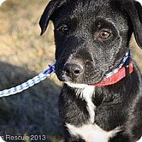 Adopt A Pet :: Pinky SugarPants - Broomfield, CO
