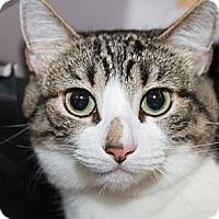 Adopt A Pet :: Roxie - Irvine, CA