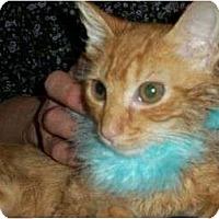 Adopt A Pet :: Russell - Reston, VA
