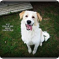 Adopt A Pet :: K.C. - Gadsden, AL