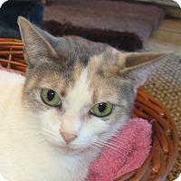 Adopt A Pet :: CARLY - Hamilton, NJ