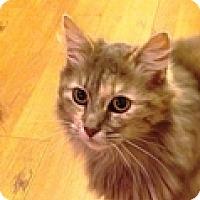 Adopt A Pet :: Archera - Vancouver, BC
