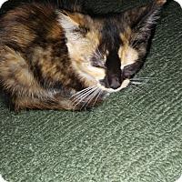 Adopt A Pet :: Copper - Chesterfield, VA