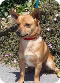 Weiner Dog Rescue Los Angeles