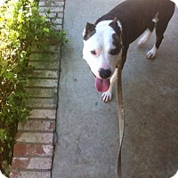 Adopt A Pet :: Dallas - Cincinnati, OH