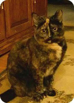 Domestic Shorthair Cat for adoption in Irwin, Pennsylvania - Julie