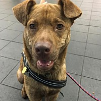 Adopt A Pet :: Colville - Amherst, NY