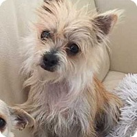 Terrier (Unknown Type, Small) Mix Dog for adoption in Allen, Texas - Mable
