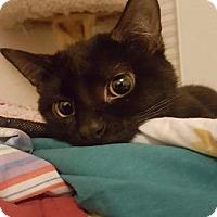 Adopt A Pet :: Monkey - Madison, AL