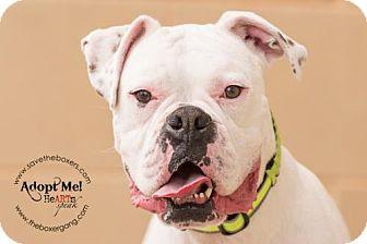 Boxer Dog for adoption in Hurst, Texas - Hurley