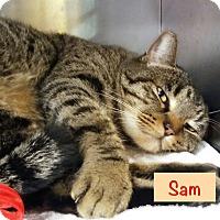 Adopt A Pet :: Sam - El Cajon, CA
