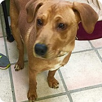 Adopt A Pet :: Dougie - Newburgh, IN