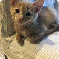 Adopt A Pet :: Mackenzie - Mission Viejo, CA