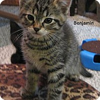 Adopt A Pet :: Benjamin - Portland, OR