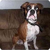 Adopt A Pet :: Layla - Cincinnati, OH