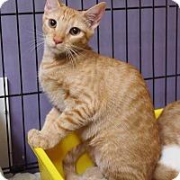 Adopt A Pet :: Chelsea - Ocean City, NJ