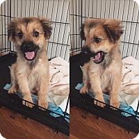 Adopt A Pet :: Athena - Fort Valley, GA