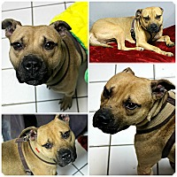 Adopt A Pet :: Puck - Forked River, NJ