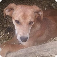Adopt A Pet :: Lucky - Staunton, VA