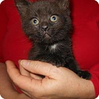 Adopt A Pet :: Jill - Reston, VA