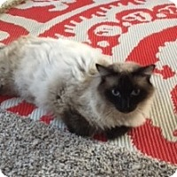 Adopt A Pet :: Ming - Arlington/Ft Worth, TX