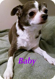 Chihuahua Dog for adoption in Durham, North Carolina - Baby
