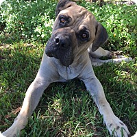 Adopt A Pet :: Foster - North Port, FL