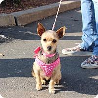 Adopt A Pet :: Emma - Yuba City, CA