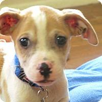 Adopt A Pet :: Linus - Wharton, TX