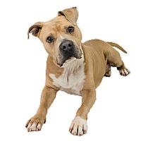 Adopt A Pet :: Frank - Dallas, TX