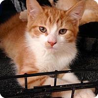 Adopt A Pet :: Basil - River Edge, NJ