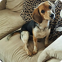 Adopt A Pet :: Harlyn - New Oxford, PA