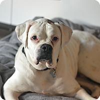 Adopt A Pet :: Mr Freckles - Austin, TX
