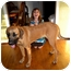 Photo 2 - Mastiff/Great Dane Mix Dog for adoption in Colleyville, Texas - Mabel