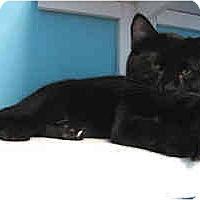 Adopt A Pet :: Sergio - Marietta, GA