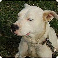 Adopt A Pet :: Carly - Nashville, TN